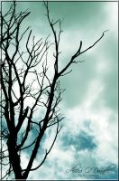 Tree Silhouette by AliciaODonnell