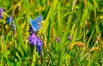 Butterfly by Paddy84
