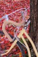 bike leaning on a tree! by taevans