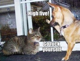 High Five! by cosenza987