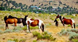 Wild Horses by MartinGollery