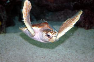 Turtle 1 by ACrazyCharade-Stock