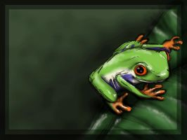 Red Eyed Tree Frog by presquevu
