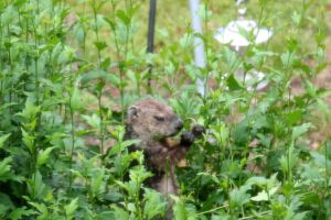 Critter Visitors B by WalnutHill