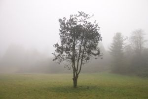 Lone Tree in Fog by anonymous-dreams