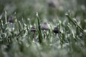 Hipster Mushrooms. Again by gophers-slipper1