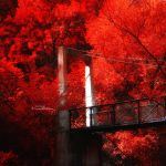 Bridge to Autumn II by ovidiupop