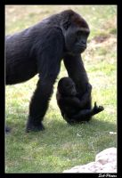 Gorilla - 'mother and child' #2 by Seb-Photos
