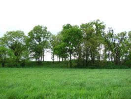 field w trees stock by iguanadongreenStock