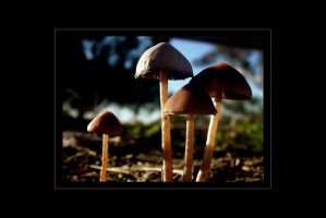 Little Mushies by asymons