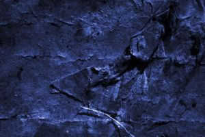 Dark Blue Series 06 by Limited-Vision-Stock