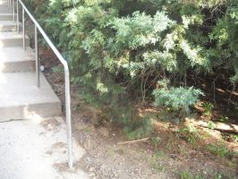 The Stairs and the Bushes by Hill House by InsanePaintStripes