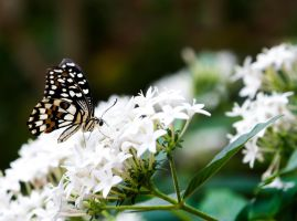 Butterfly 14 by tpphotography