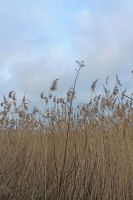 reed by NaturesMate