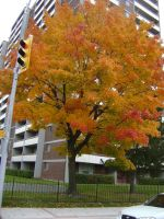 Canadian Fall Colours 39 by Aswang301