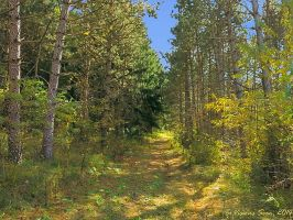 Forest Trail 4 by VisionsSeen
