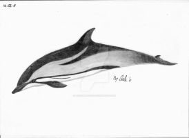 Dolphin by airforlife2011