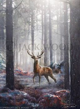 Stag in the Woods by Jack-Wood