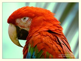 Macaw 3 by Karl-B