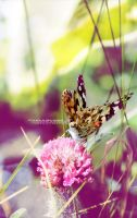 ::Butterfly:: by Bntuae