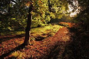 Autumn Path by scotto