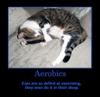 Aerobics by Eco-Cate