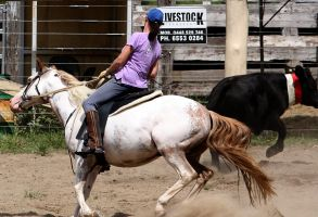 Stock - Horse Team Penning - 055 by aussiegal7