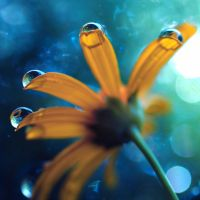 droplets by Mars-Hill