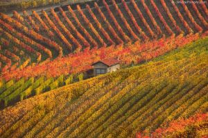 House in Barolo by SimonePomata