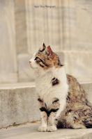 cat by melikebenli