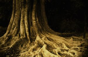 The Root by hhjjii