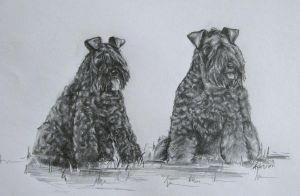 Kerry Blue Terriers by SpikedPyro