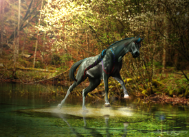 Through the forest river .: PC:. by EquineLullaby
