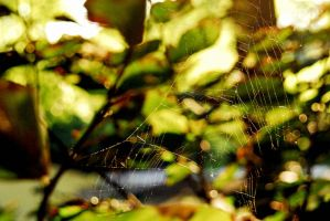 spider web by cantthinkof-aname