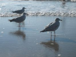 Dutch Seagulls II by webworm