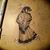 20170227 Hawk Traditional Sketch Psdelux by psdeluxe