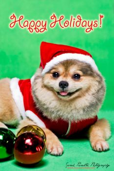 Happy Holidays Dog by pinay-malaya