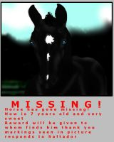 Our missing Horse?? by LHS-Stable