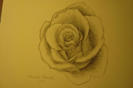 Charcoal Rose by Lunasaraka