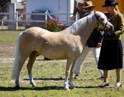 STOCK - Canungra Show 2012 097 by fillyrox