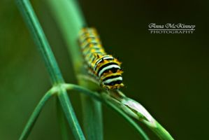 Baby Caterpillar by Annushkka