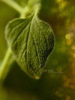 My plants are so hairy by JeffStahl
