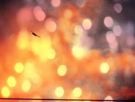 Fly high II. by Daenel