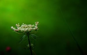 The Queen's Lace by SMBaird