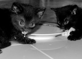 Zombie kittens by the808track