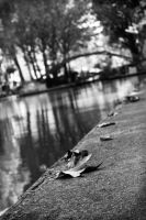 Autumn at the canal by foleydurden
