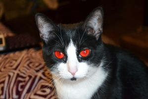 Red eyed Lexi Cat by WolvezRule