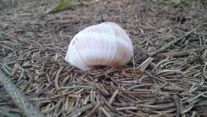 Shell in the Forest 2 by wrorschach