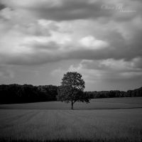 Lonesome Tree II by OliverBPhotography