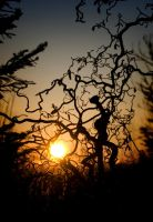 Sun and tree by Nystuen